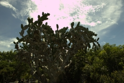 hotel-kaktus